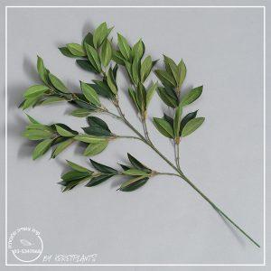 ענף פיקוס השדרה