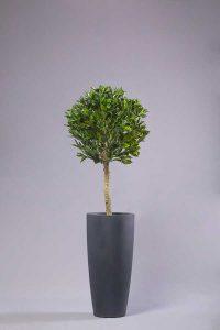 תמונה מתוך קטלוג צמחייה מלאכותית של חברת קרת צמחייה מלאכותית